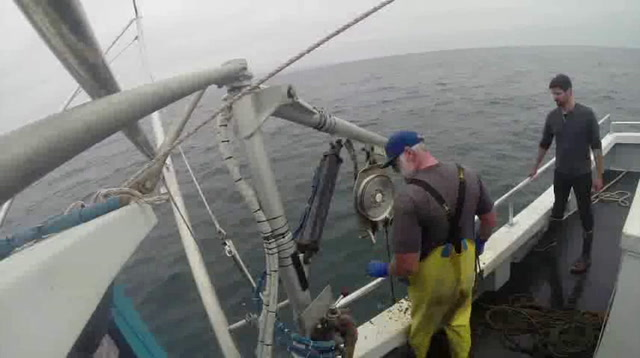 Catch of the Day: Crab Traps to Protect Whales
