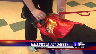 Halloween hazards to avoid this season to keep your pets safe