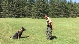 Obedience training with DNR K-9 Schody