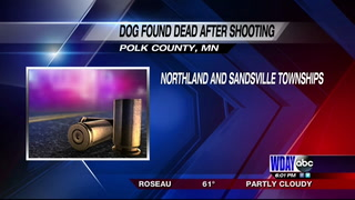 Dog dead, bullet holes found in private property