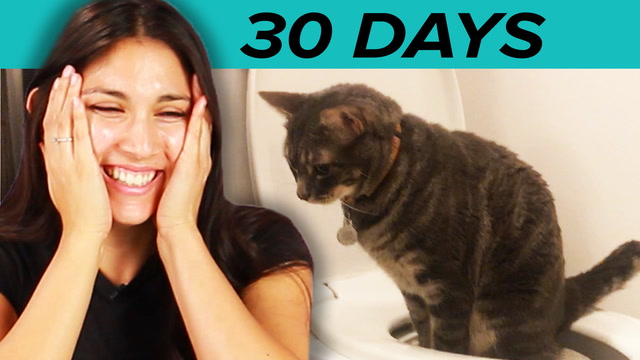 I Trained My Cat To Use A Toilet In 30 Days