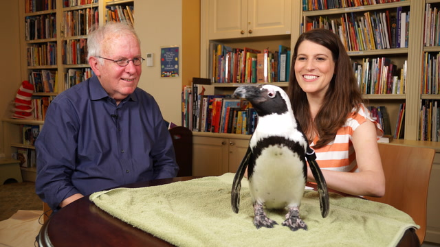 What sound does a penguin make?