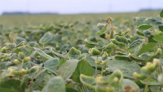 AgweekTV: Dicamba Impact in South Dakota