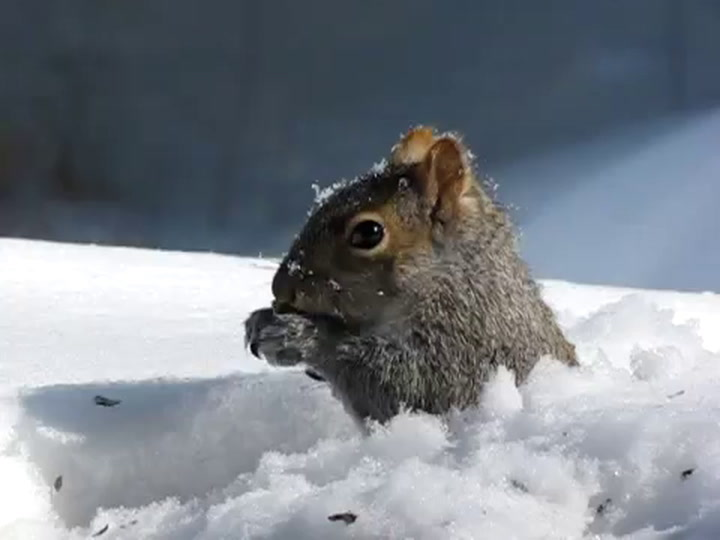 Winter's Chill Is No Match for Animals With Antifreeze in Their Veins