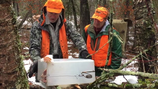 Marten and fisher trapping north of Grand Rapids