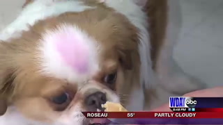 Doggy ice cream social held to connect local pet owners