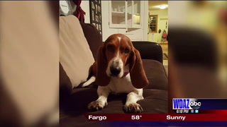 Duluth family looking for dog lost in Grand Forks