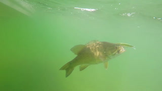 Smallmouth bass fishing on Mille Lacs Lake
