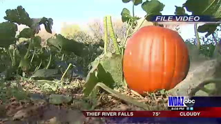 Buffalo River Pumpkin Patch opens Saturday