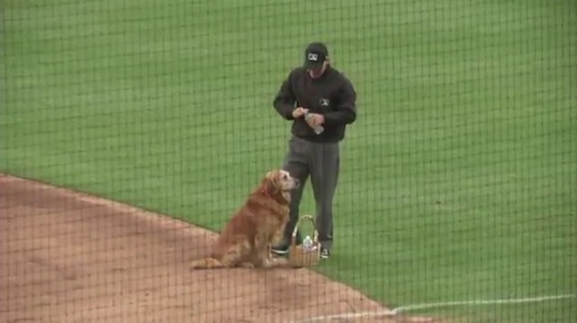 Cute Video Tweeted Of MLB Dog Delivering Water