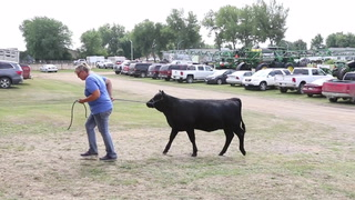 Wednesday at the Nobles County Fair