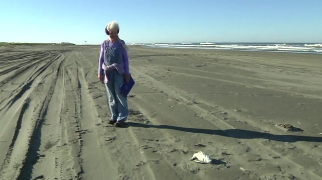 Citizen Patrols Scour Beaches for Dead Seabirds