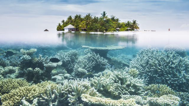 Why the Great Barrier Reef Needs Us More Than Ever