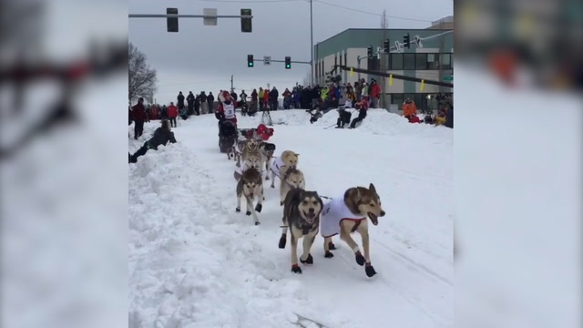 Iditarod kicks off with ceremonial start