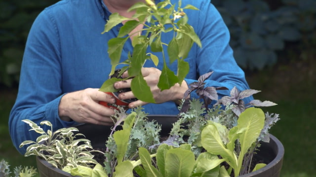 How to Grow a Plentiful Container Vegetable Garden