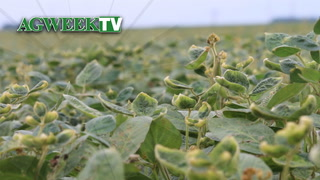 AgweekTV: Dicamba Drift Damage (Full Show)
