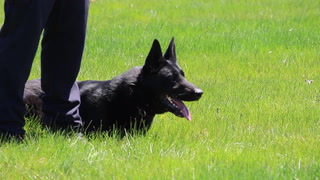 Area K-9 units demonstrate their skills