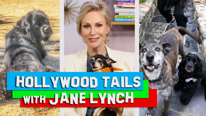 Jane Lynch Lets Her Three Dogs Sleep in Bed With Her and Girlfriend Jennifer Cheyne