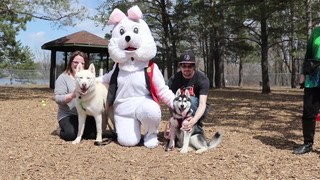 Easter Ball Hunt at Buster Dog Park